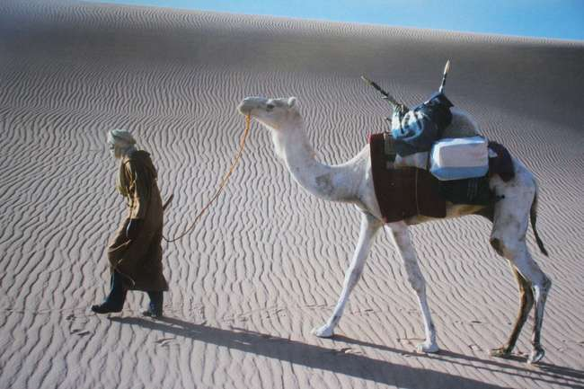 20th Century Figure and Camel on the Dunes Colour photograph
